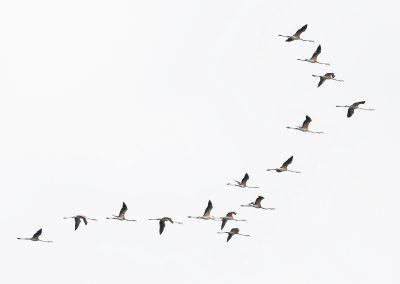 07-flamingo-6g7a6668