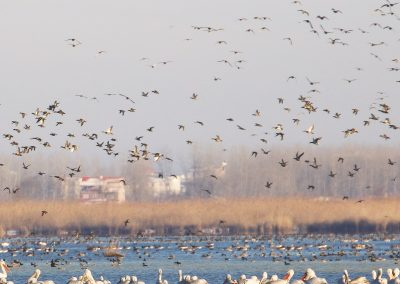 Anzali_Wetland_Newsletter6_ページ_01_resized