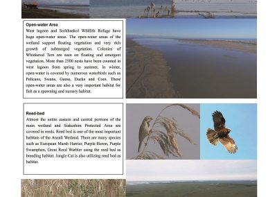 Anzali_Wetland_Newsletter6_ページ_04_resized