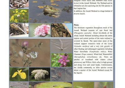 Anzali_Wetland_Newsletter6_ページ_07_resized