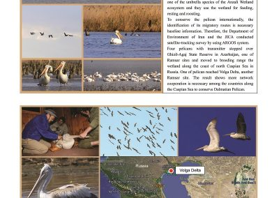 Anzali_Wetland_Newsletter6_ページ_11_resized