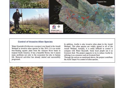 Anzali_Wetland_Newsletter6_ページ_12_resized