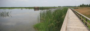 Improvement of Anzali Wetland Environmental Education Center in Selkeh Wildlife Refuge