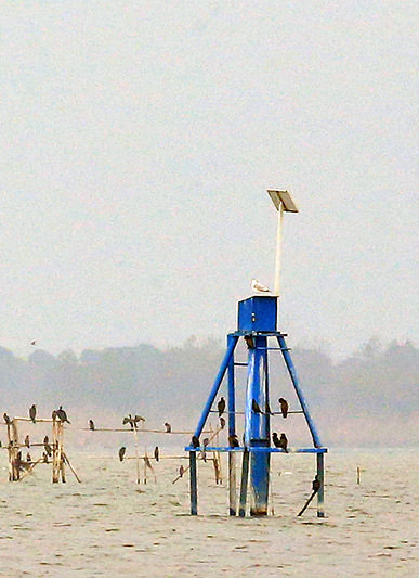 نصب ایستگاه های سنجش سطح آب تالاب انزلی